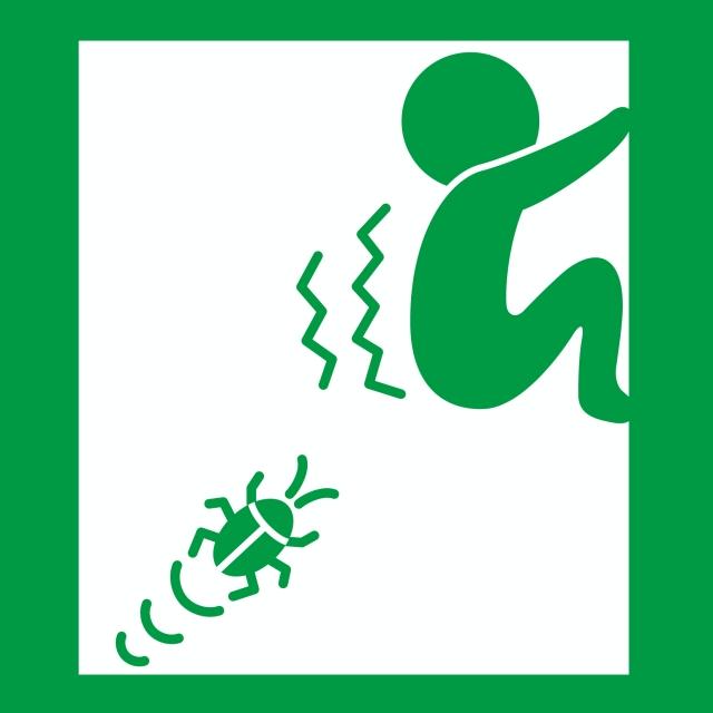 デング熱やゴキブリ対策にも!樟脳(しょうのう)オイルで夏を乗り切る