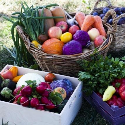 【無農薬野菜と農薬野菜】危険性や安全性を考えることに大して意味はない